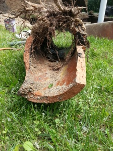 Broken Sewer Line with Roots